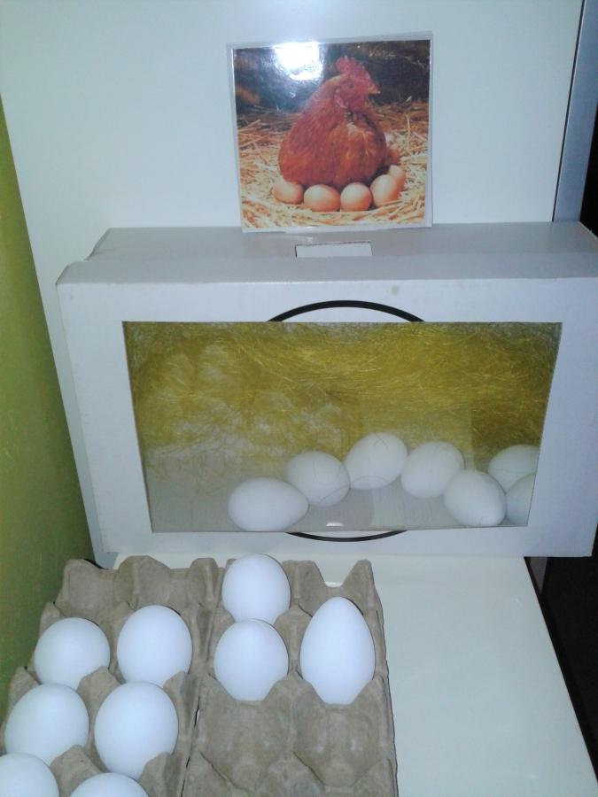 Kip en eieren